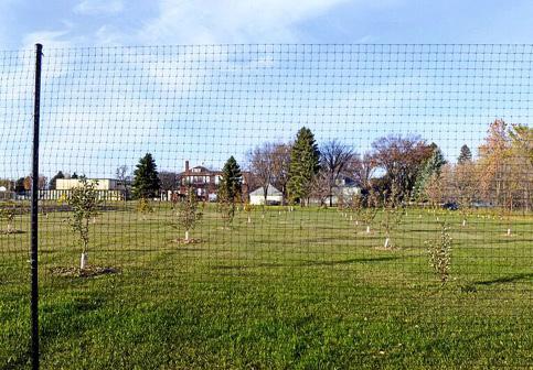Prairie-Dawn-Orchard