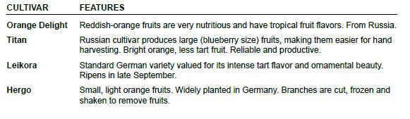Seaberry Chart