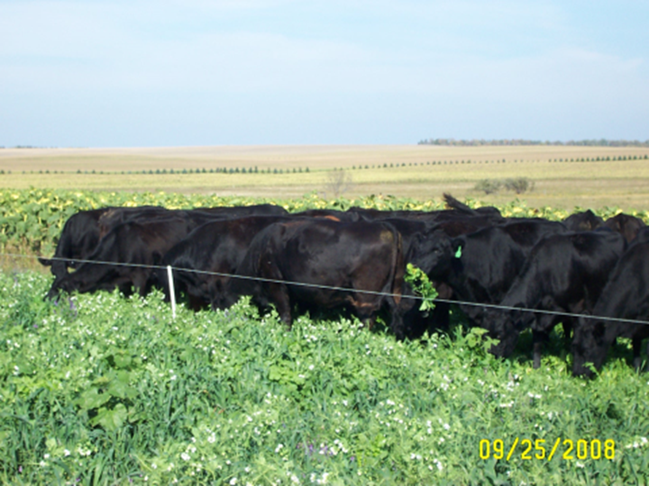 Dual Crop Grazing