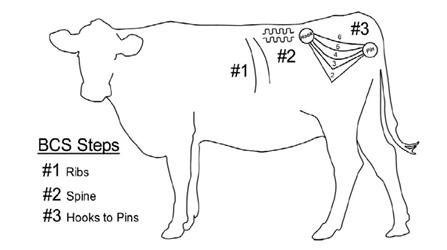 BCS illustration