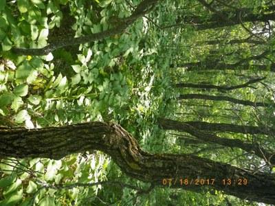loamy savannah ecological site