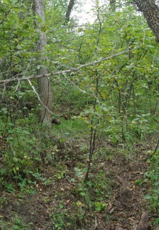 steep sided wooded draw