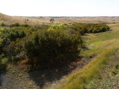 shrub-dominated loamy overflow plant community