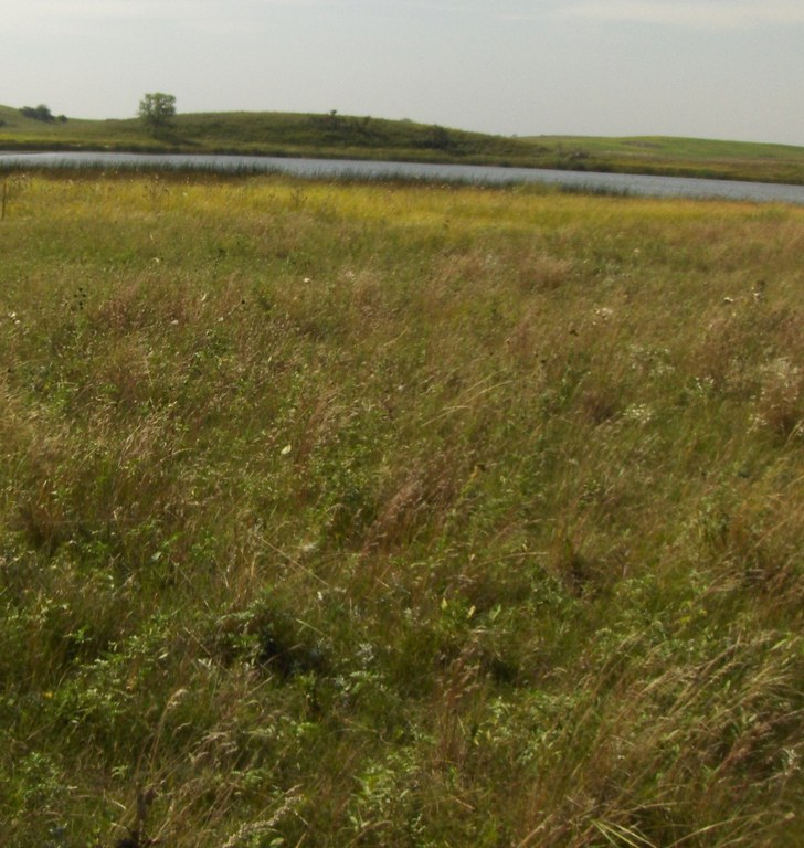 limy subirrigated ecological site