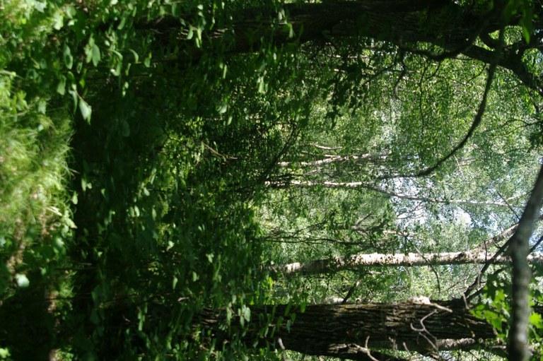 upland hardwood forest