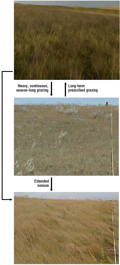 thin loamy plant communities