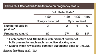 Effect of bull-to-heifer ratio on pregnancy status