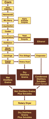 Ethanol and related coproducts production process diagram.