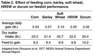 Effect of feeding corn barley