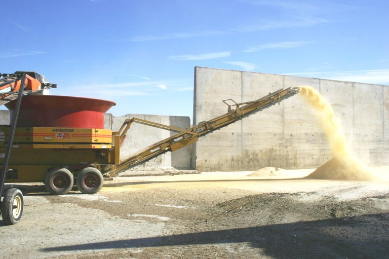 Grain being processed with tub grinder