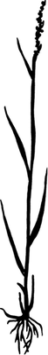 Figure 2 % of weight of western wheatgrass