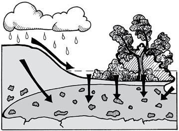 Healthy flood plains