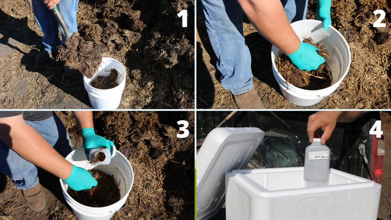 banner pics of how to sample manure