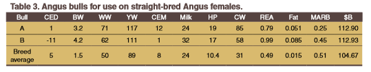 Angus bulls for us on Angus females