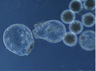 Embryo Lab from Anna 4
