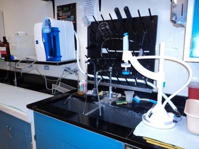Mol Bio Lab 4