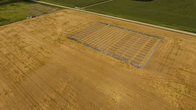Ada wheat harvest 2017