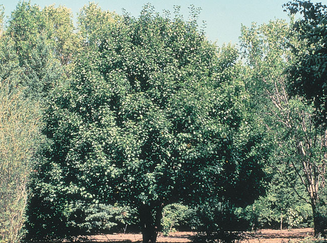 ND Tree Selector