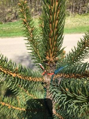 Twist tie on tree
