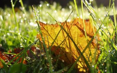 Leaf on lawn in autumn.