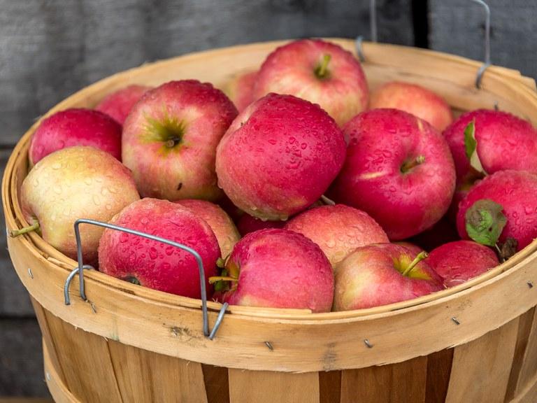 Apples in a bushel basket