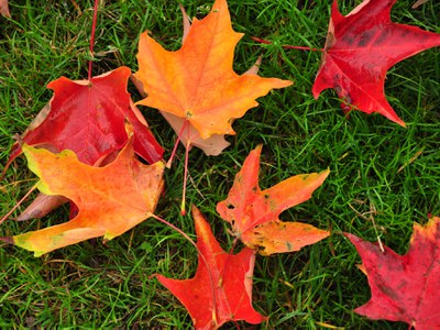 Leaves on lawn