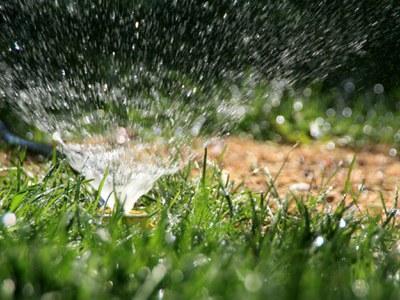 Irrigating lawn seed