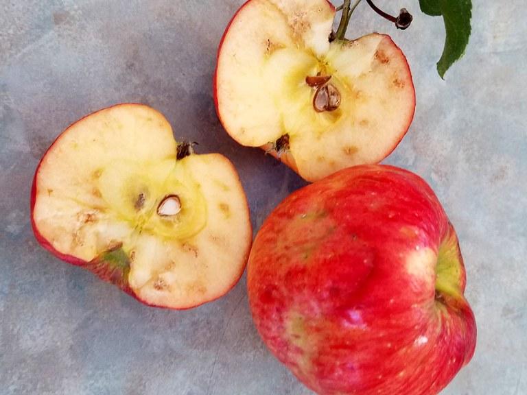 Apple maggot damage