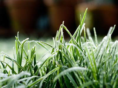 Frost on lawn