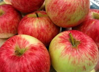 'Duchess of Oldenburg' apple
