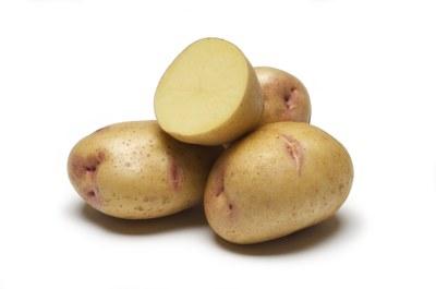 'Yukon Gem' potato with white background