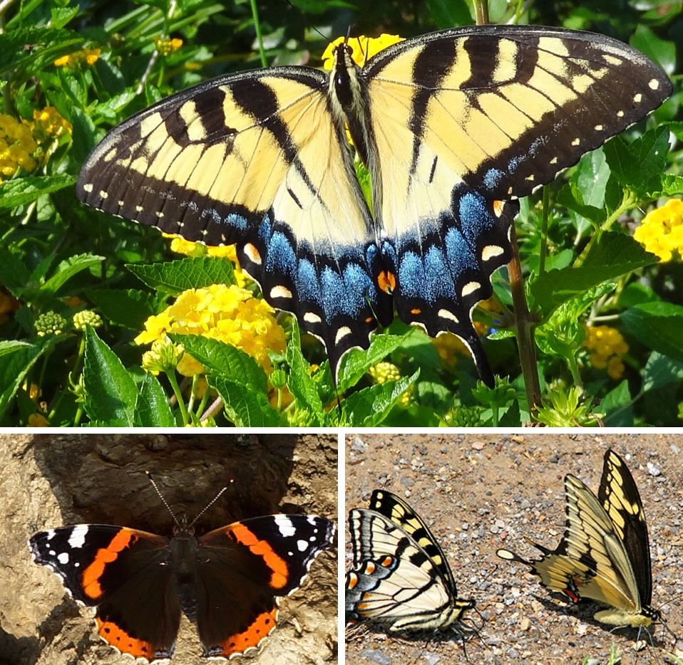Invite butterflies