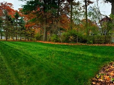 Lawn in fall