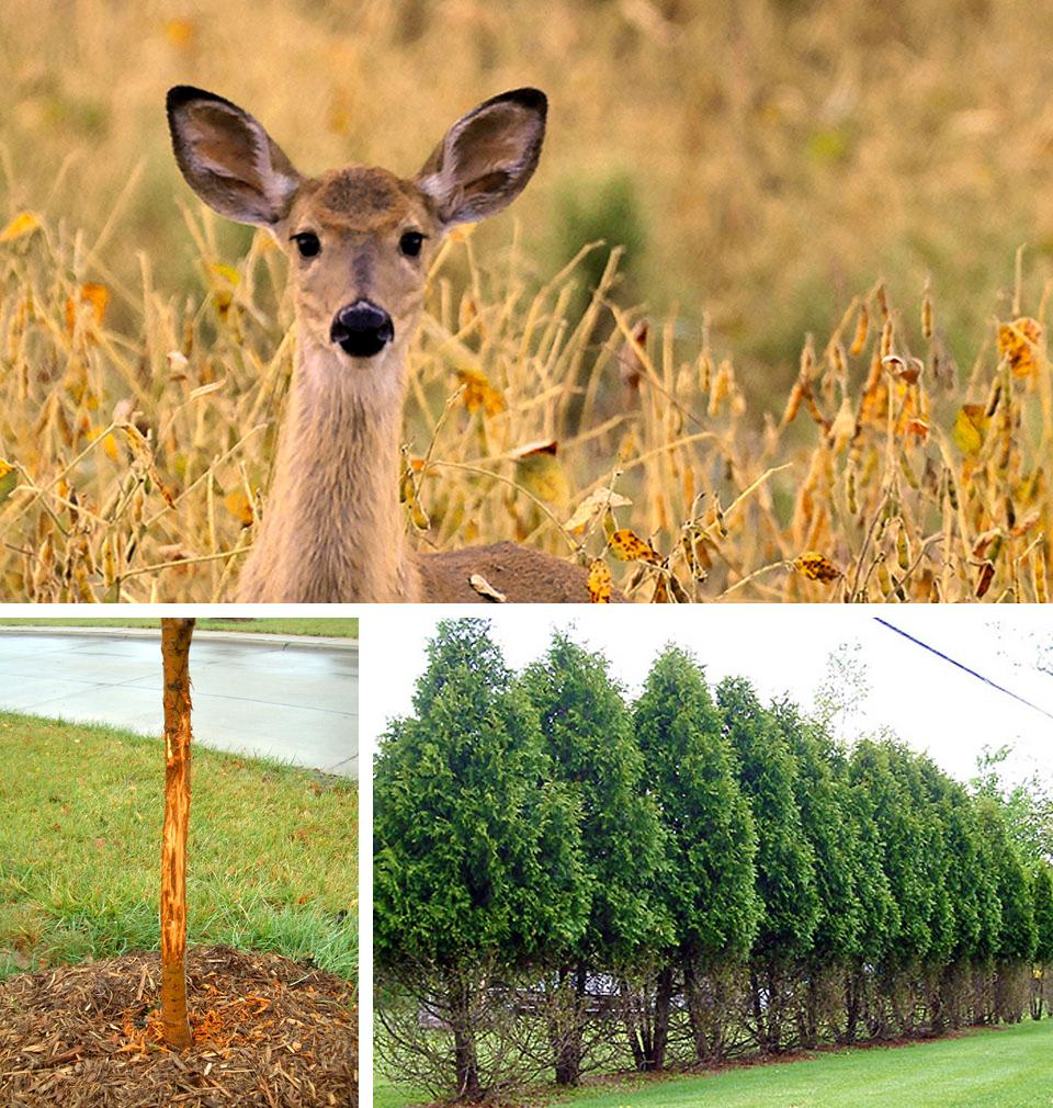 Deer Repellents Yard Amp Garden Report