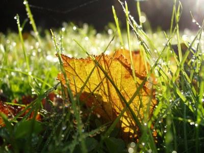 Fallen leaf on lawn