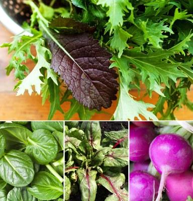 Fall salad greens