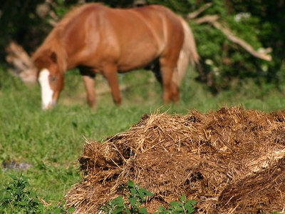 Horse with manure in pasture