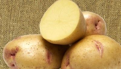 'Yukon Gem' potato